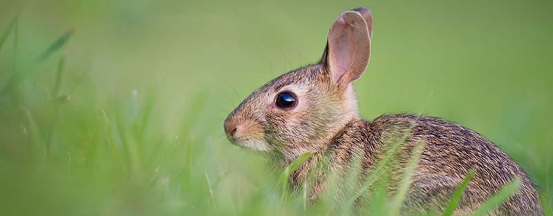 Wir wünschen Ihnen frohe Ostern.